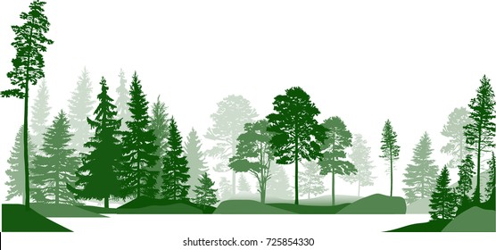 illustration with high pines in fir trees forest isolated on white background