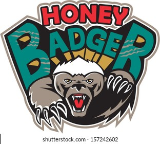 Illustration of a honey badger (Mellivora capensis) mascot also known as ratel head facing front attacking with claws and paw and text on isolated white background.