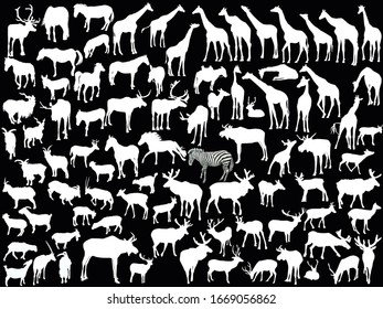 illustration with hoofed mammals collection isolated on black background