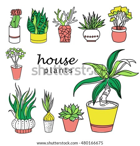 Indoor home office plants royalty Potted Plants Illustration Of Houseplants Indoor And Office Plants In Potset Of House Plant Isolated Adobe Stock Illustration Houseplants Indoor Office Plants Pot Stock Vector