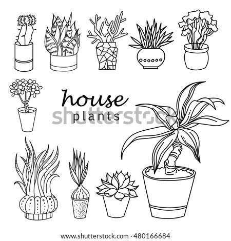 Indoor home office plants royalty Greenhouse Illustration Of Houseplants Indoor And Office Plants In Potset Of House Plant Isolated Leagueofgalaxyinfo Illustration Houseplants Indoor Office Plants Pot Stock Vector
