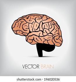 illustration of human brain, Vector graphic