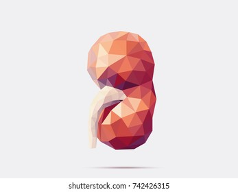 Illustration of human kidney with faceted low-poly geometry effect