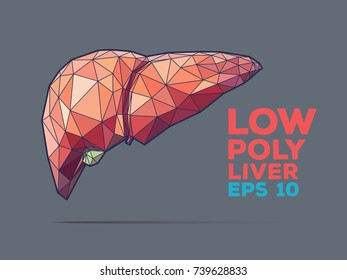 Illustration of human liver with faceted low-poly geometry effect