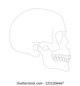 Illustration of Human Skull Side View Simple Silhouette on White Background