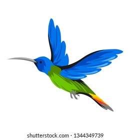 Illustration of hummingbird. Tropical exotic bird isolated on white background.