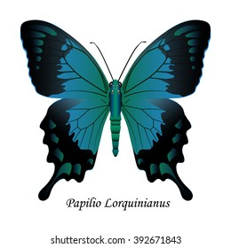 Illustration of Indonesia Swallowtail Butterfly - Papilio Lorquinianus. Element for design. ClipArt. The element of training patterns, biological descriptions, etc.