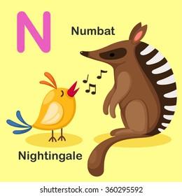 Illustration Isolated Animal Alphabet Letter N-Numbat,Nightingale.vector