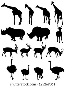 illustration of isolated giraffe,rhinoceros,deer,ostrich .vector