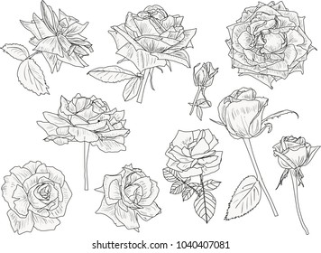 illustration with isolated light roses sketches