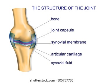 illustration of the joint anatomy