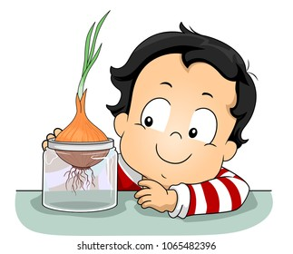 Illustration of a Kid Boy Observing a Growing Onion Plant on a Glass Container