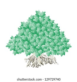 An Illustration of Landscaping Tree Symbol or Isometric Trees and Plants, Banyan Tree or Bod hi Tree for Garden Decoration