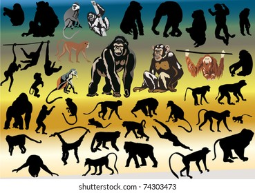 illustration with large collection of different monkeys