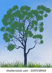 illustration with large eucalyptus in green grass