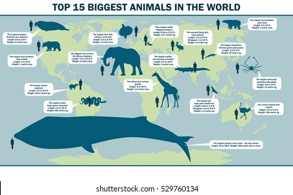 illustration of the largest animals in the world