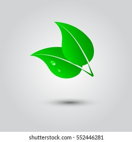 illustration of a leaf and water drops on a white background