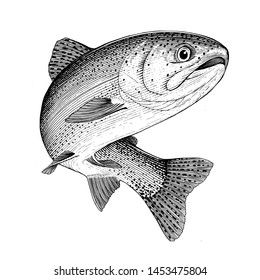 Illustration of a leaping Rainbow Trout