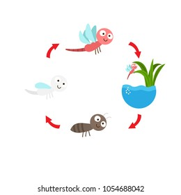 illustration life cycle  dragonfly vector