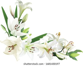 illustration with lily flowers corner isolated on white background