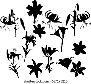 illustration with lily silhouettes isolated on white background