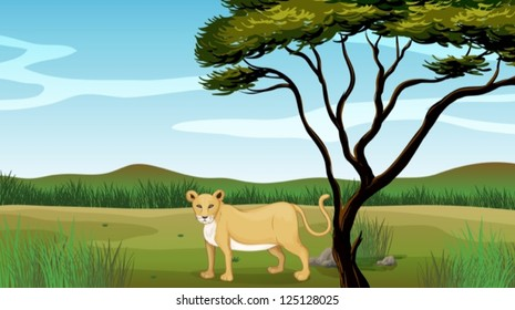 Illustration of a lion in a field