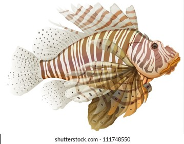 Illustration of a lionfish