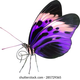 illustration of little colorful purple butterfly on isolated background