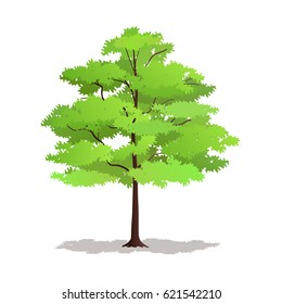 Illustration of a Lush Tree for Forest, Park and Garden Plants.