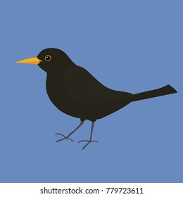 An illustration of a male blackbird