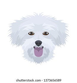Illustration Maltese | For all Dog owners. What you love about his dog? Puppy dog eyes, wagging tail, smiling, barking. The Maltese is a man's best friend.
