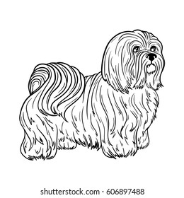 "Illustration ""Maltese"" was created in black and white colors. Painted image is isolated on white background. It  can be used for coloring books for adult."