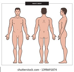 Illustration of man body and male anatomy. Front, back and side view. Linear colored silhouette of man. Vector Illustration - Vector