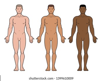 Illustration of man s body and male anatomy. Front view. 3 types of skin tone. Fair-skinned and dark-skinned. Outline Vector Illustration - Vector