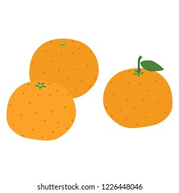 Illustration of the mandarin orange