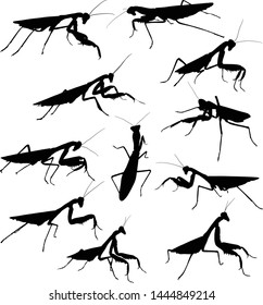 illustration with mantids silhouettes isolated on white background