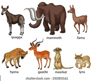Illustration of many types of animals