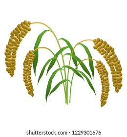 Illustration of the millet