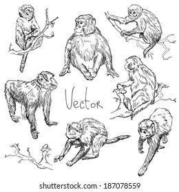 Illustration with monkeys in vector.