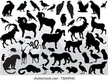 illustration with mountain animals collection isolated on white