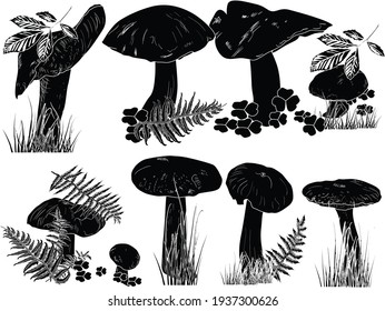 illustration with mushrooms on white background