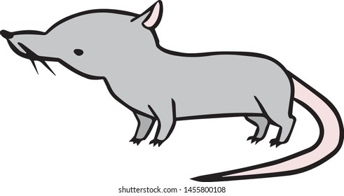 Illustration of the musk shrew