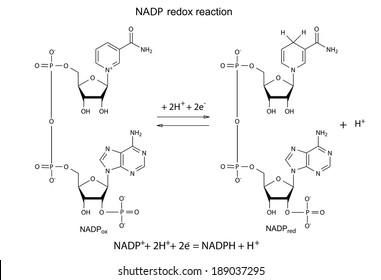 illustration of nadp redox reaction with chemical formulas, vector,  isolated on white  redox reaction diagram