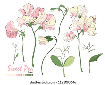 Illustration of nature elements. Set of bouquets vector. Floral stickers collection. Bouquets of flowers, branches, pink sweet pea, and leaves isolated on white. Stylish wedding floral elements