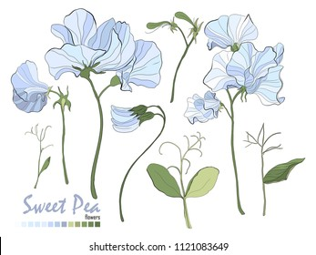Illustration of nature elements. Set of bouquets vector. Floral stickers collection. Bouquets of flowers, branches, blue sweet pea, and leaves isolated on white. Stylish wedding floral elements