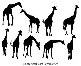 illustration with nine giraffe silhouettes isolated on white