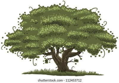 illustration of an old oak tree
