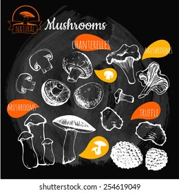 Illustration on a blackboard. Hand-drawn sketch. Fresh organic food. Mushrooms: shiitake, chanterelle, honey. Sketch of mushrooms on black background.