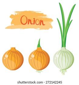 illustration. onion on white background 2