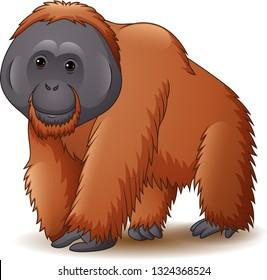 Illustration of orangutan isolated on white background